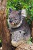 -gunns-plains_tas_fb.jpg