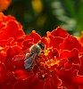 -bee-red-flower-2.jpg
