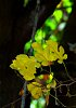 -yellow-leaves.jpg