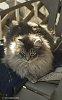 -bilbo-cat-1.jpg