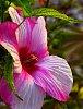 -pink-closeup.jpg