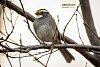 -birdblackyelloew2fb.jpg