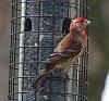 -2018-backyard-birds-3.jpg