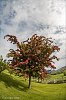 -singing-tree.jpg