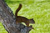 -flash-frozen-squirrel-small.jpg