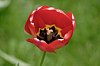 -red-beauty-small.jpg