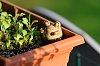 -guardian-lettuce-box-small.jpg