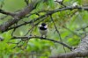 -chickadee-sunflower-seed-small.jpg