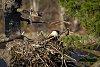-eaglets2fb-1-1-.jpg