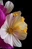 -crepe-paper-white-petals.jpg