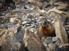 -marmot-country.jpg