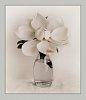 -magnolia3.jpg