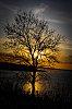 -siloughette-tree.jpg