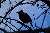 -dscf0098-1024-jay-silhouette.jpg