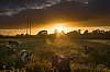 -all-cows-sunset2.jpg