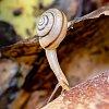 -snail.jpg