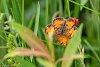 -butterfly.jpg