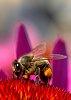-bee-1.jpg