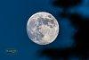 -moon1fb-2535-2.jpg