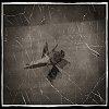-dragonfly_old6x.jpg