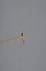 -man-crane-windspeed-50kmph-2.jpg