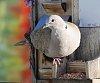 -bird-1.jpg
