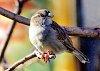 -bird-12.jpg