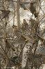 -avian-brunch.jpg