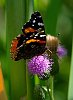 -butterfly-1.jpg