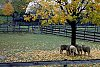 -sheep_in_autumn_1988.jpg