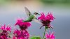 -july-bees-hummingbirds-11.jpg