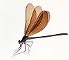 -boat-dragonfly-b.jpg