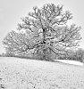 -tree-snowk5__6166apr-09-2018-09-04-18.jpg