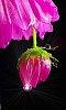 -flower-23.jpg