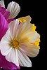 -flower-24.jpg