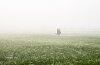 -foggy-3-copy.jpg