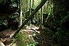 -wv_forest.jpg