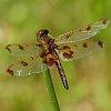-battle-scarred-wings-small.jpg