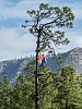 -arizona-flag-rim-background-5248.jpg
