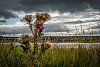 -scottish-machair.jpg