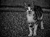 -crying_cat.jpg