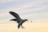 -2013-10-05-gulls-47-1-.jpg