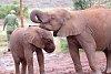 -elephant-1.jpg
