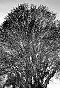 -blooming-tree.jpg