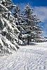 -snowy-morning.jpg