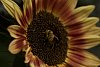 -fall-bee-1.jpg