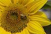 -fall-bee-2.jpg