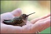 -hummer-hand-3-rs.jpg