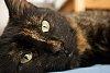 -best-kitty-ever.jpg