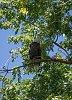-back-yard-eagle2.jpg